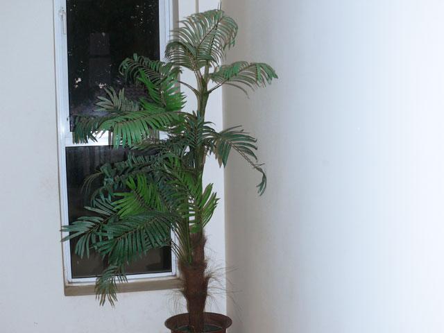 Tropical Lobby